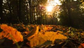 Autumn Landscape e tramonto Immagini Stock Libere da Diritti
