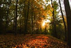 Autumn Landscape e tramonto Fotografie Stock Libere da Diritti