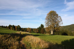 Autumn Landscape an einem Nachmittag Sun mit einem alleinen Baum, Nationalpark Sumava, Tschechische Republik, Europa Lizenzfreie Stockbilder