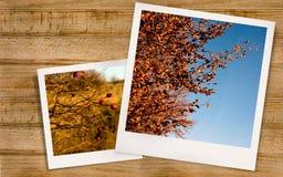 Autumn Landscape et cynorrhodons Photos stock