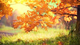Autumn landscape. Fall. Colorful leaves on a oak in autumnal park. Autumn landscape. Fall. Bright colorful leaves on a oak in autumnal park stock photo