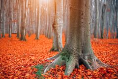 Free Autumn Landscape, Fall Scene. Beautiful Autumnal Park With Colorful Bright Red Leaves, Old Trees. Beauty Nature Scene Royalty Free Stock Images - 199976299