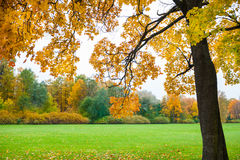 Autumn landscape. Fall scene. Royalty Free Stock Images