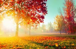 Free Autumn Landscape. Fall Scene.Trees And Leaves In Sunlight Rays Royalty Free Stock Images - 151793239