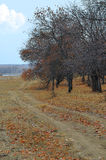 Autumn Landscape, fallen leaves and bare trees Royalty Free Stock Photography