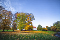 Autumn landscape with fallen leaves Royalty Free Stock Photography