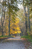 Autumn Landscape with fallen leaves and the path Stock Images