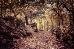 Autumn landscape with fallen leaves and stone Royalty Free Stock Photo