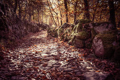 Autumn landscape with fallen leaves and stone Stock Photos