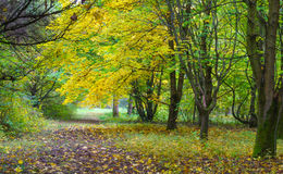 Autumn landscape - fallen yellow leaves and a path in the forest Stock Photo