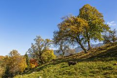Autumn landscape with farm animals Royalty Free Stock Image