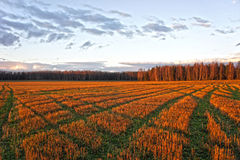 Autumn Landscape Feld bei Sonnenuntergang Lizenzfreies Stockfoto