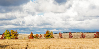 Autumn landscape of the field Royalty Free Stock Image