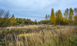 The autumn. Autumn landscape. Field and forest in bright autumn colors Stock Images