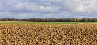 Autumn Landscape in a Field Royalty Free Stock Photography