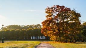 Autumn landscape. The Field of Mars in Saint Petersburg. Autumn 2016. Stock Image
