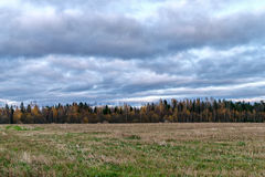 Autumn Landscape, field, yellowing trees in the forest, low overcast clouds Stock Images