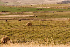 Autumn landscape fields swaths. Autumn landscape with fields and dry grass hay in swaths windrows Royalty Free Stock Images