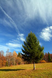 Autumn landscape with fir tree Stock Photos