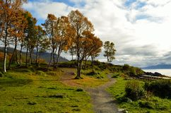 Autumn landscape with fjord, tree and sunshine Royalty Free Stock Image
