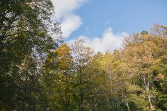 Autumn Landscape Floresta colorida do outono Imagens de Stock Royalty Free