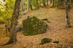 Autumn Landscape Floresta colorida do outono Imagens de Stock