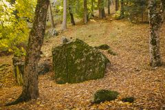 Autumn Landscape Floresta colorida do outono Imagem de Stock Royalty Free