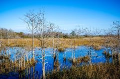 Autumn in the cypress marsh royalty free stock photos