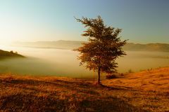 Autumn landscape with fog. Autumn landscape, lonely tree in the middle of the field Royalty Free Stock Photography