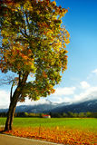 Autumn landscape with fog in bavaria germany Stock Image