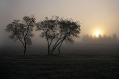Autumn landscape. fog. Beautiful autumn sunrise solntsa. Fog Stock Photos
