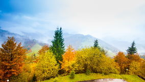 Autumn landscape with fog in the mountains. Fir forest on the hills. stock video