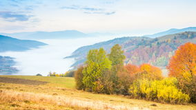 Autumn landscape with fog in the mountains. Fir forest on the hills. stock footage