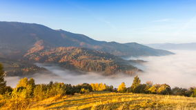 Autumn landscape with fog in the mountains. Fir forest on the hills. stock video footage