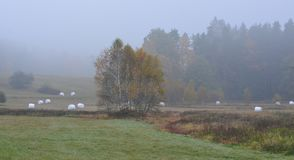 Autumn landscape in fog, southern Bohemia stock image