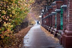 Autumn park alley with bare trees and dry fallen colorful leaves. Autumn landscape- foggy autumn park alley with bare trees and dry fallen colorful leaves Stock Image