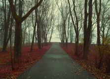 Autumn landscape- foggy autumn park alley with bare trees and dry fallen orange autumn leaves. Mysterious autumn landscape scene royalty free stock photography