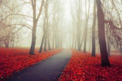 Autumn landscape- foggy autumn park alley with bare trees and fallen colorful leaves. Autumn landscape- foggy autumn park alley with bare trees and dry fallen Royalty Free Stock Image