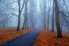 Autumn landscape- foggy autumn park alley with bare trees and fallen colorful orange leaves. Autumn landscape- foggy autumn park alley with bare trees and dry royalty free stock images