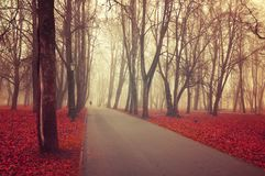 Autumn landscape. Foggy autumn park alley with bare trees and fallen colorful red leaves. Autumn landscape. Foggy autumn park alley with bare autumn trees and stock photos