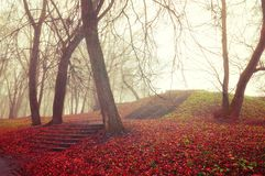Autumn landscape. Foggy autumn park alley with bare autumn trees and fallen autumn leaves covering the old stone stairs. Autumn gothic landscape. Foggy autumn royalty free stock photo