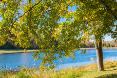 Autumn landscape. Autumn foliage, maple tree branches against lake. Sunny day in park stock photos