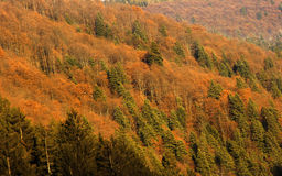 Autumn landscape forest Royalty Free Stock Photography