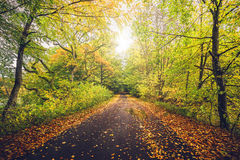 Autumn landscape with a forest in autumn. Colors near a forest trail going through the forest in beautiful autumn colors in the fall Royalty Free Stock Photography