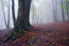 Autumn landscape of a forest with fog and leafs Royalty Free Stock Photo