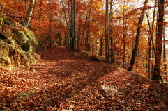 Autumn colors in a landscape in the forest. Colored leaves. Autumn background Royalty Free Stock Photography