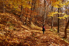Autumn colors in a landscape in the forest. Colored leaves. Autumn background stock photography