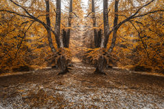 Autumn landscape in the forest Royalty Free Stock Image
