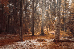 Autumn landscape in the forest Royalty Free Stock Photos