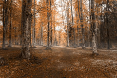 Autumn landscape in the forest Stock Images